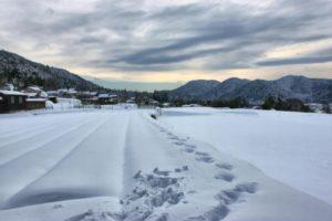 雪下出麦 ゆきわたりてむぎのびる