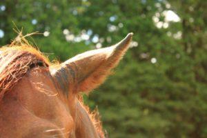 馬の耳 馬耳東風