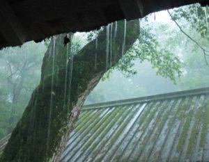 半夏雨 豪雨